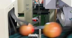 2.光センサー、形センサーで的確に品質・等級を選別する『イタマーズ選果機』